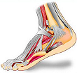 Orthotic Solutions